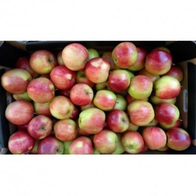Obuoliai CHAMPION 65+, 2 kl, kg